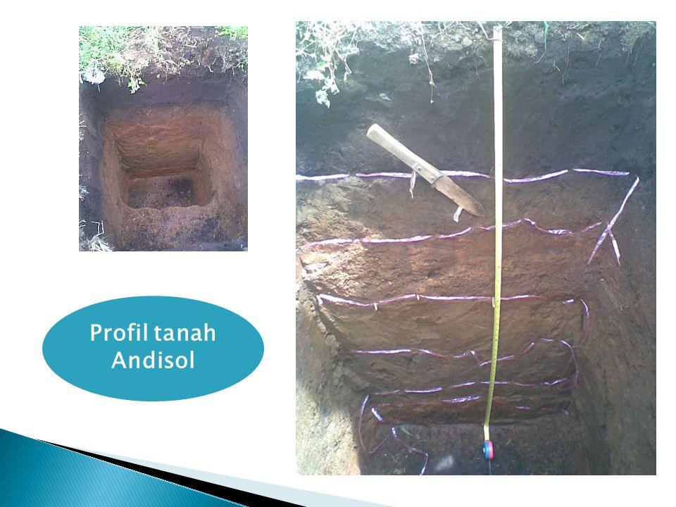 Profil tanah Andisol