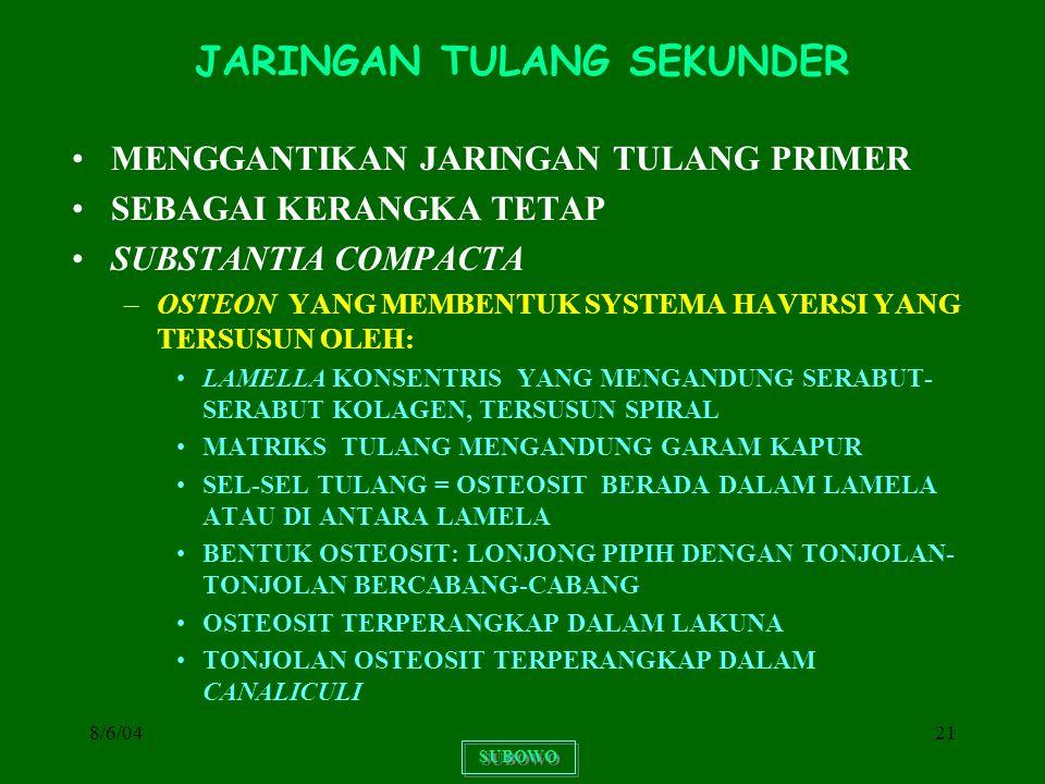 JARINGAN TULANG SEKUNDER