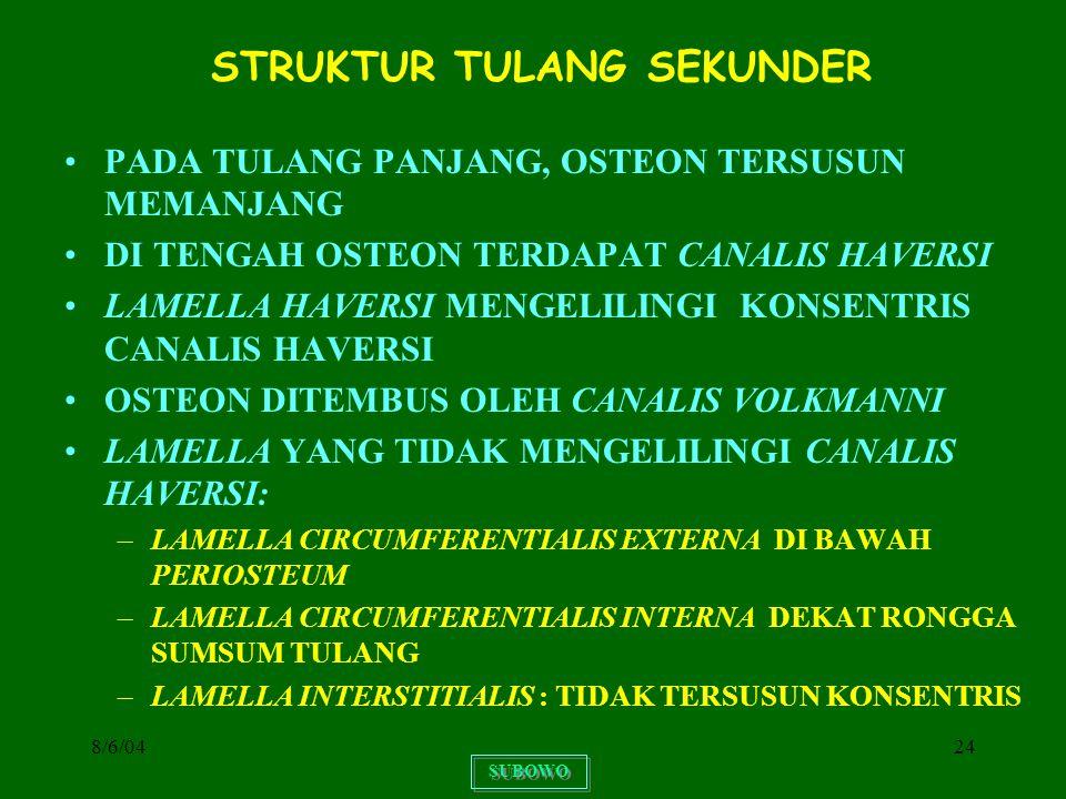STRUKTUR TULANG SEKUNDER