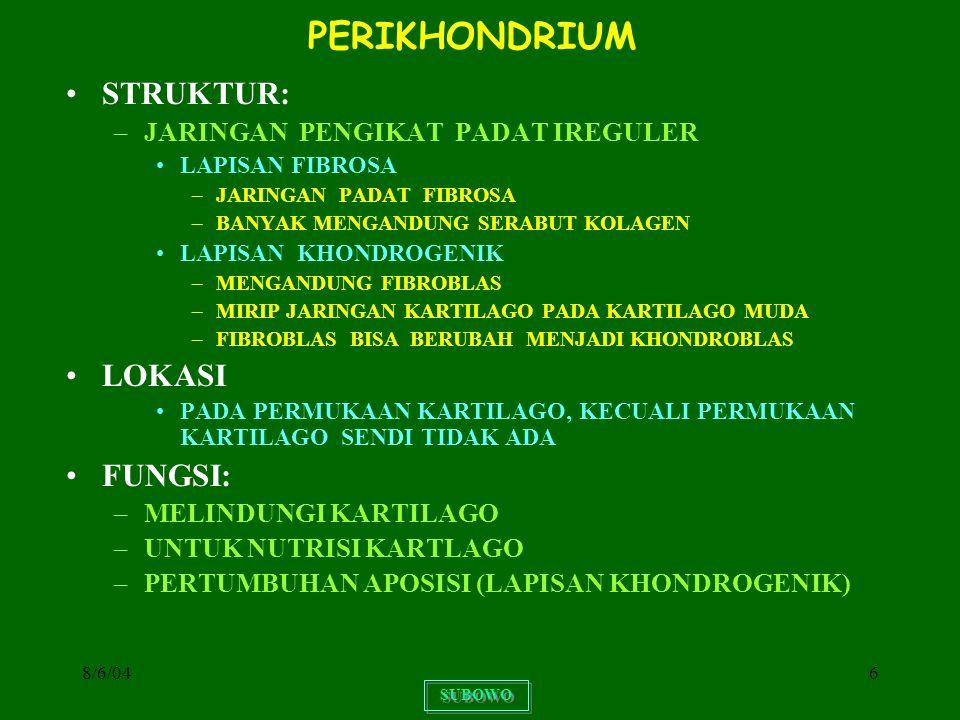 PERIKHONDRIUM STRUKTUR: LOKASI FUNGSI: