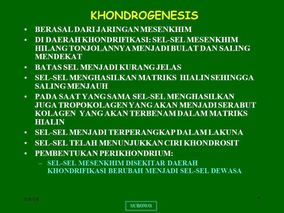 KHONDROGENESIS BERASAL DARI JARINGAN MESENKHIM