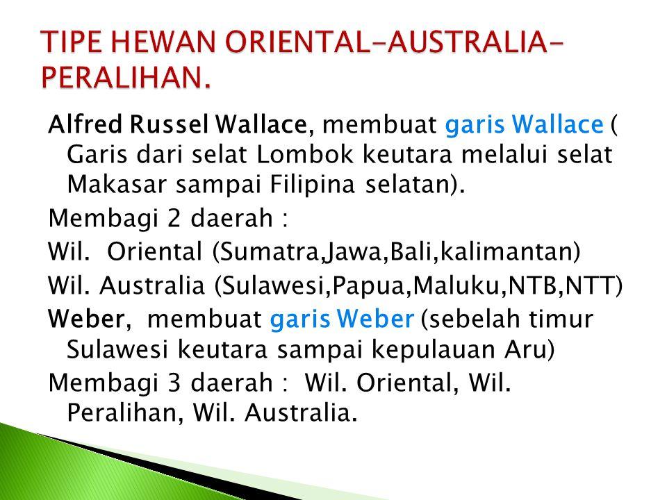 TIPE HEWAN ORIENTAL-AUSTRALIA-PERALIHAN.