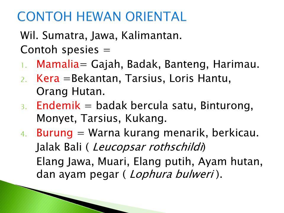 CONTOH HEWAN ORIENTAL Wil. Sumatra, Jawa, Kalimantan. Contoh spesies =