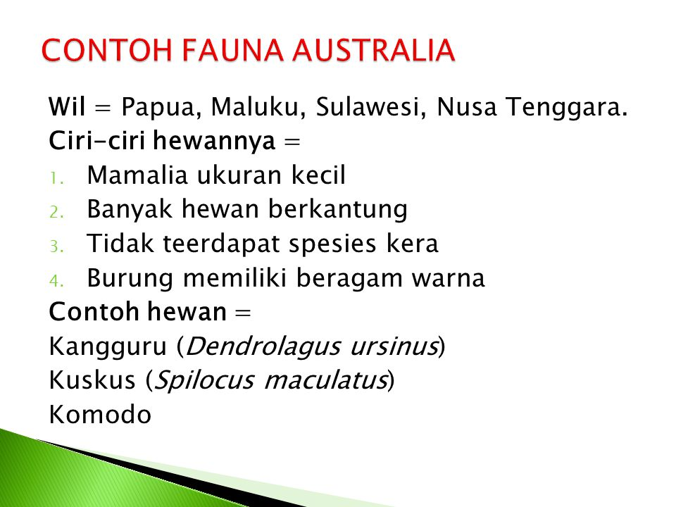 CONTOH FAUNA AUSTRALIA