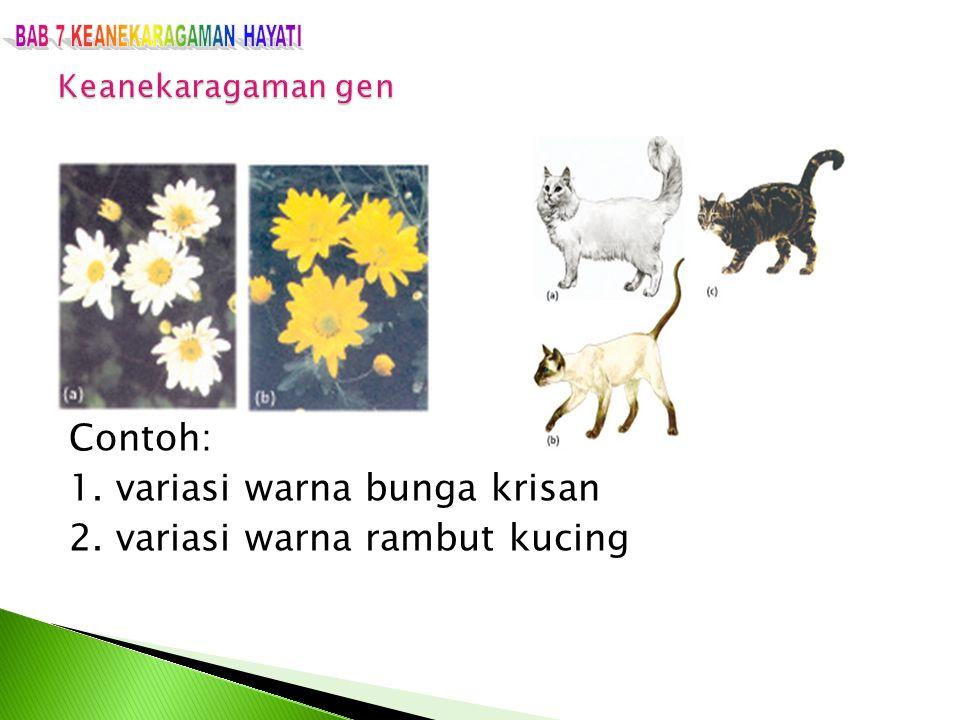 BAB 7 KEANEKARAGAMAN HAYATI