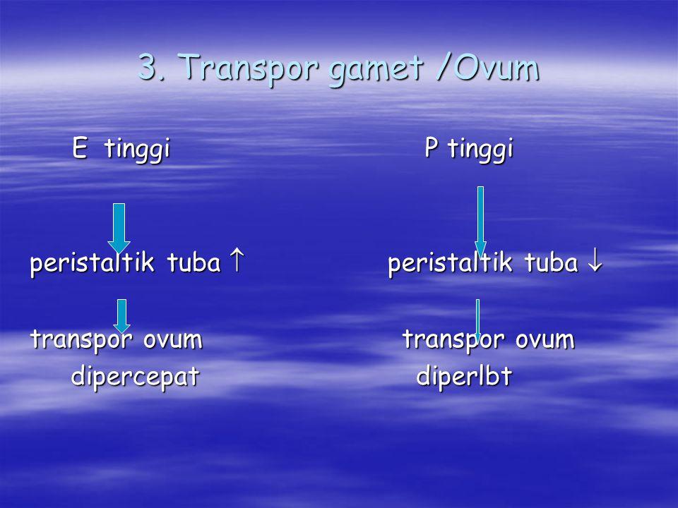 3. Transpor gamet /Ovum E tinggi P tinggi