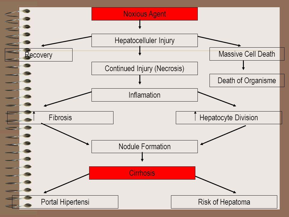 Hepatocelluler Injury