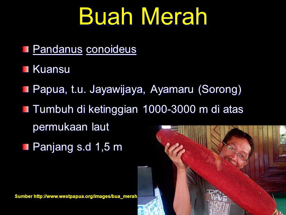 Buah Merah Pandanus conoideus Kuansu