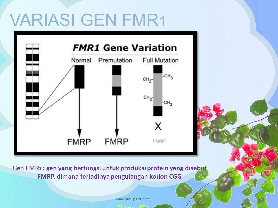 VARIASI GEN FMR1 Gen FMR1 : gen yang berfungsi untuk produksi protein yang disebut FMRP, dimana terjadinya pengulangan kodon CGG.