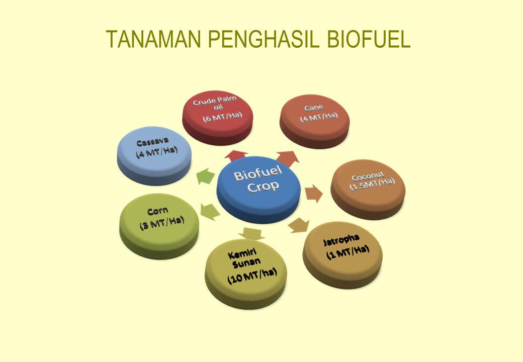 TANAMAN PENGHASIL BIOFUEL