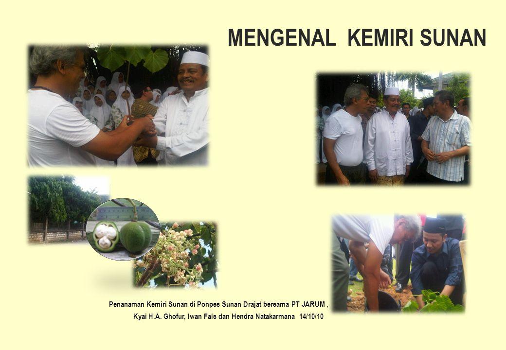 MENGENAL KEMIRI SUNAN Penanaman Kemiri Sunan di Ponpes Sunan Drajat bersama PT JARUM , Kyai H.A.