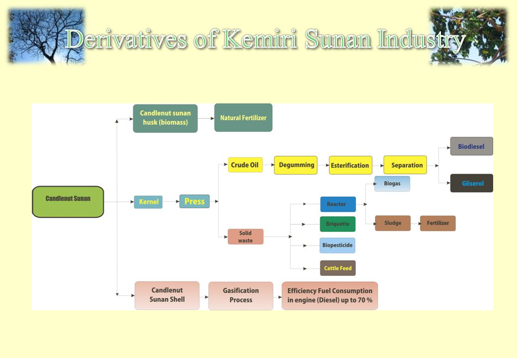 Derivatives of Kemiri Sunan Industry