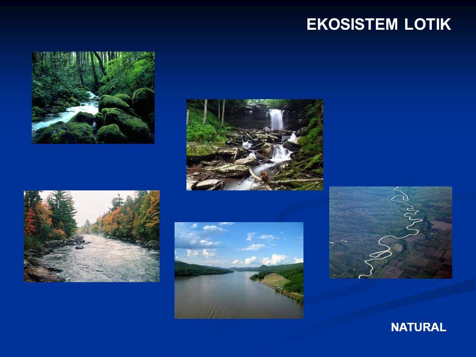 EKOSISTEM LOTIK NATURAL