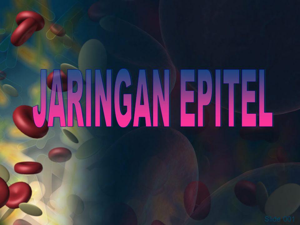 JARINGAN EPITEL Slide 001
