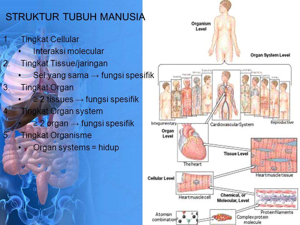 STRUKTUR TUBUH MANUSIA