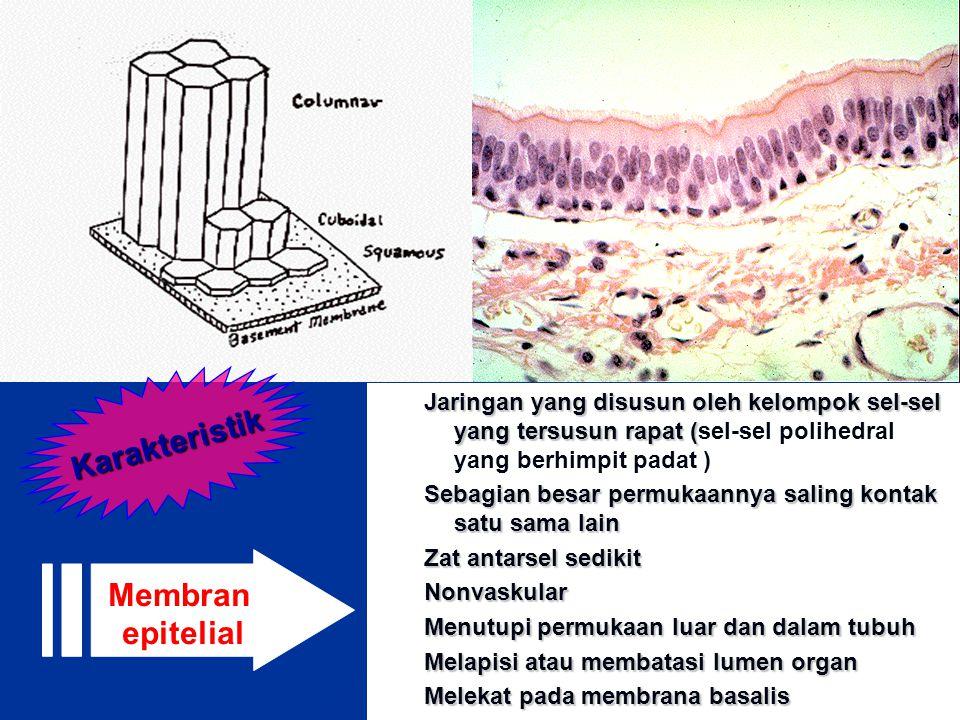 Karakteristik Membran epitelial