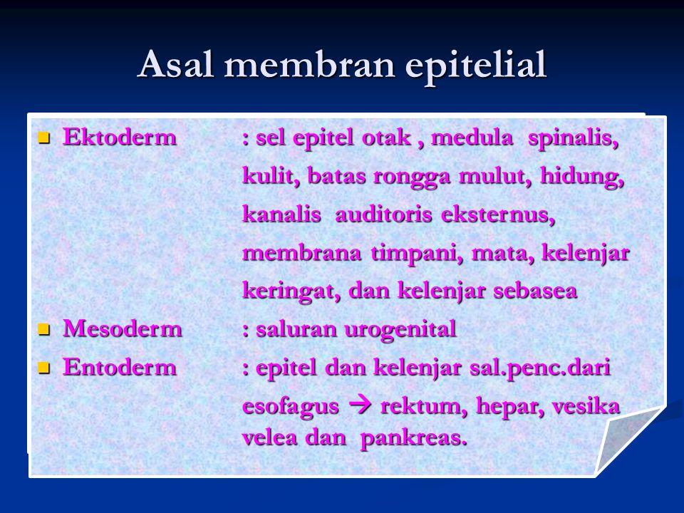 Asal membran epitelial