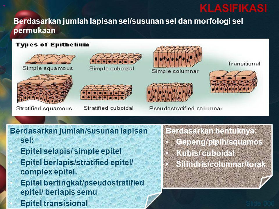 ` KLASIFIKASI Berdasarkan jumlah lapisan sel/susunan sel dan morfologi sel permukaan.