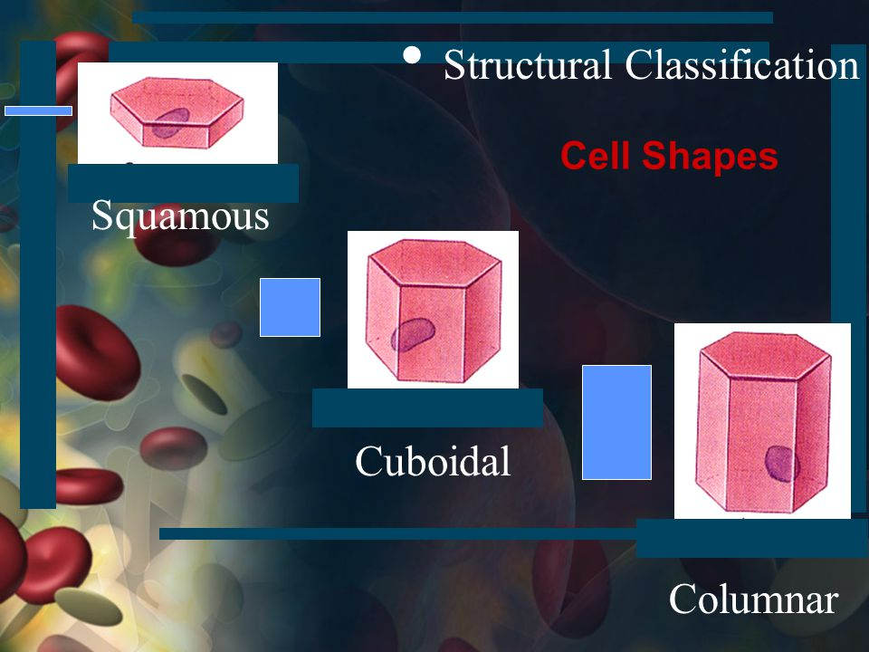 • Structural Classification