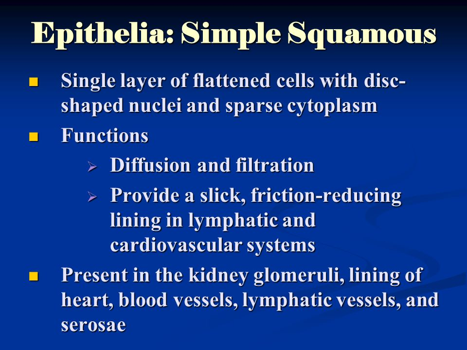 Epithelia: Simple Squamous