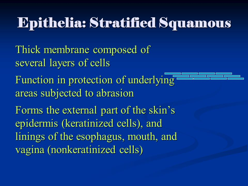 Epithelia: Stratified Squamous