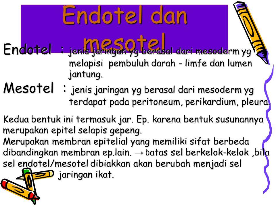 Endotel dan mesotel Endotel : jenis jaringan yg berasal dari mesoderm yg. melapisi pembuluh darah - limfe dan lumen.