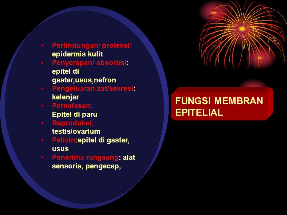 FUNGSI MEMBRAN EPITELIAL Perlindungan/ proteksi: epidermis kulit