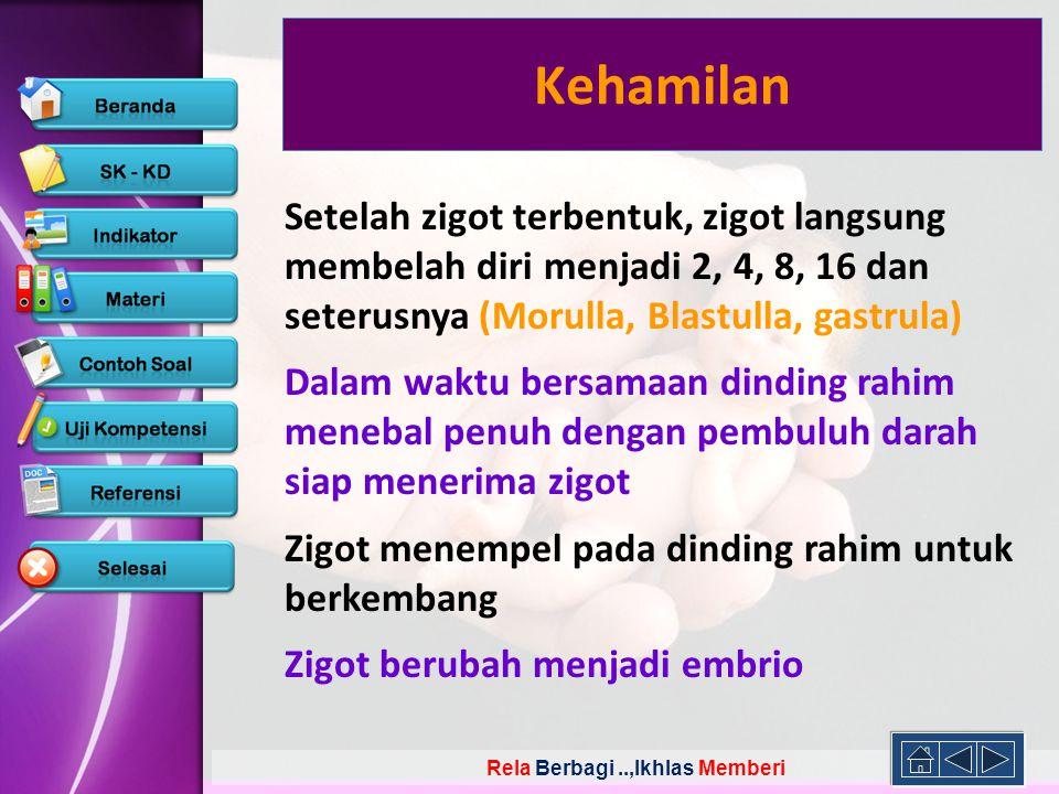 Kehamilan Setelah zigot terbentuk, zigot langsung membelah diri menjadi 2, 4, 8, 16 dan seterusnya (Morulla, Blastulla, gastrula)