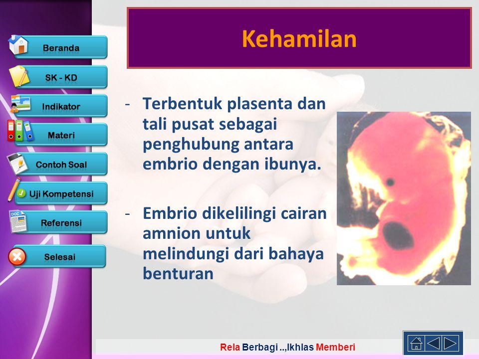 Kehamilan Terbentuk plasenta dan tali pusat sebagai penghubung antara embrio dengan ibunya.