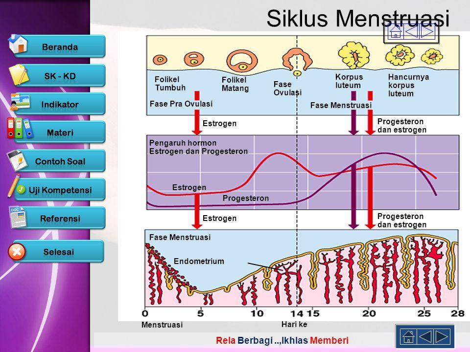 Siklus Menstruasi Folikel Tumbuh Matang Fase Ovulasi Korpus luteum