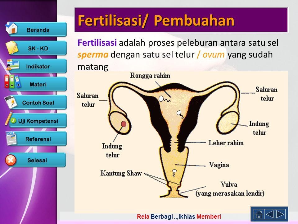 Fertilisasi/ Pembuahan