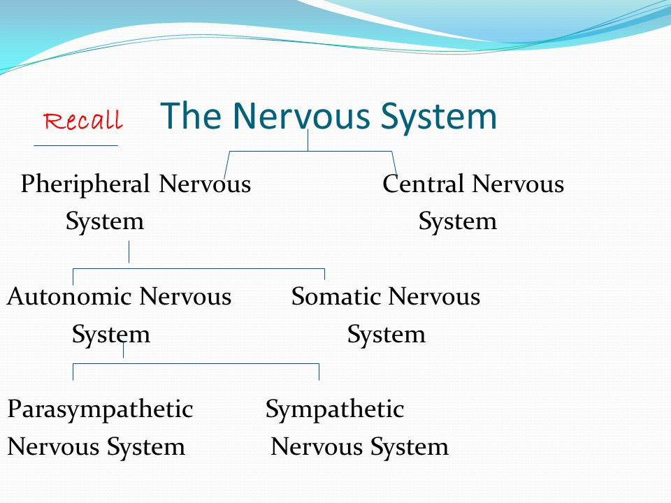 Recall The Nervous System