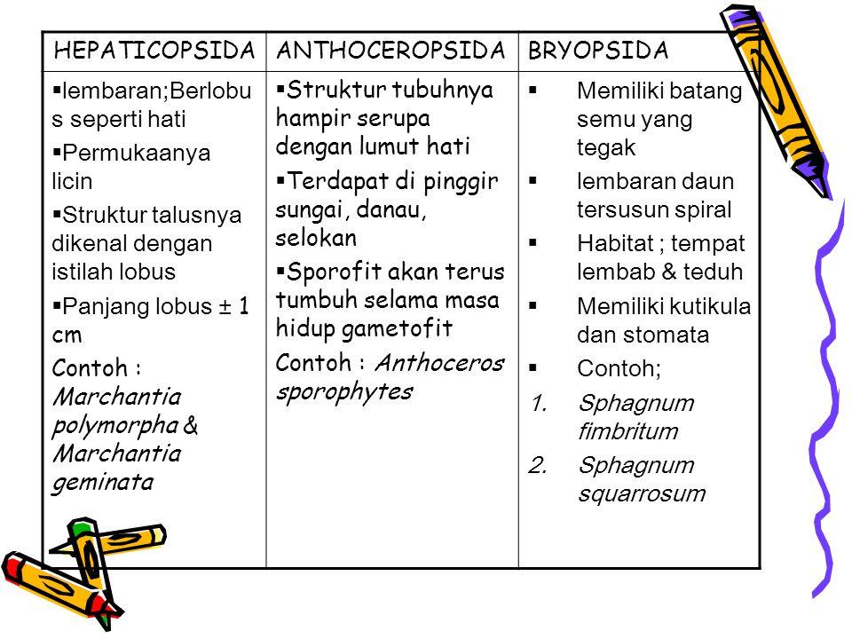 HEPATICOPSIDA ANTHOCEROPSIDA. BRYOPSIDA. lembaran;Berlobus seperti hati. Permukaanya licin. Struktur talusnya dikenal dengan istilah lobus.