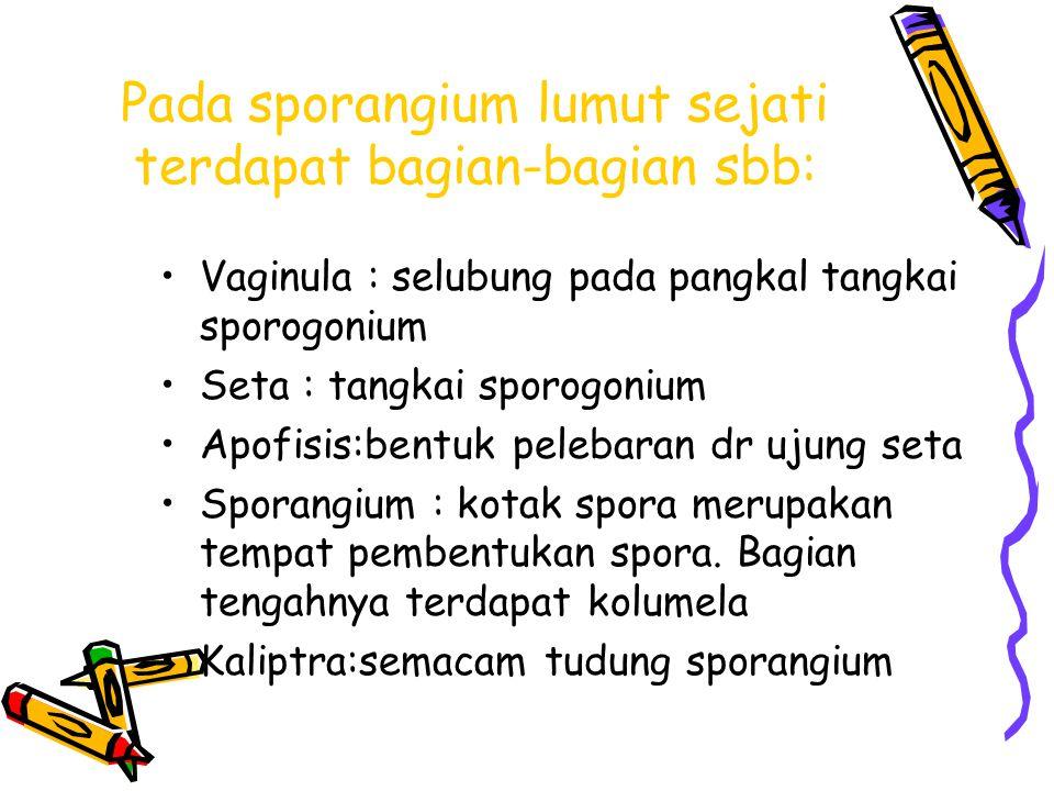 Pada sporangium lumut sejati terdapat bagian-bagian sbb: