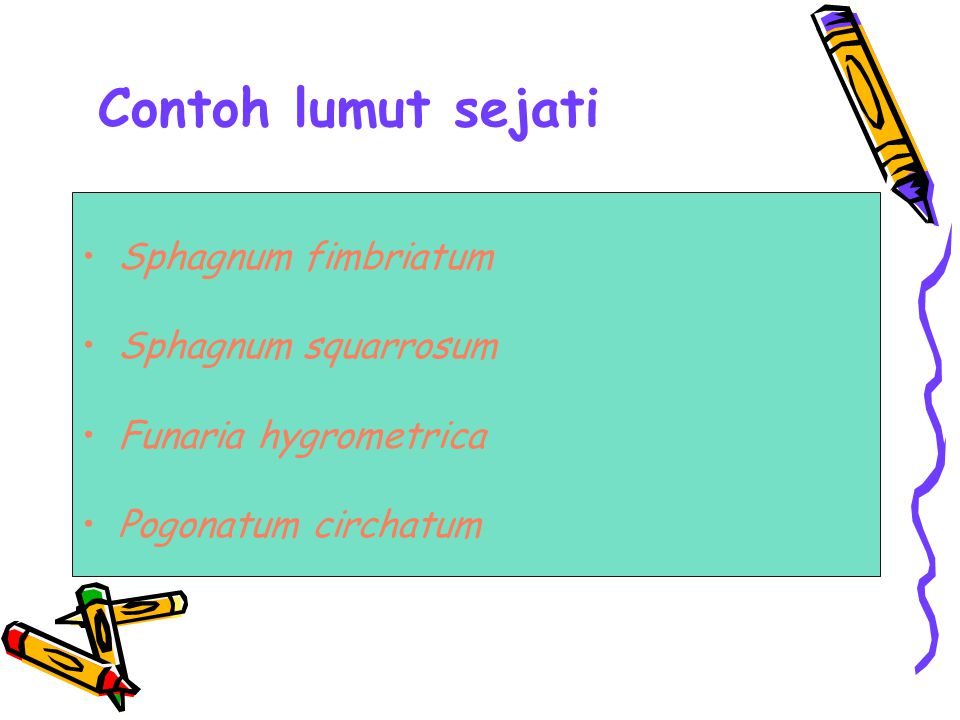 Contoh lumut sejati Sphagnum fimbriatum Sphagnum squarrosum