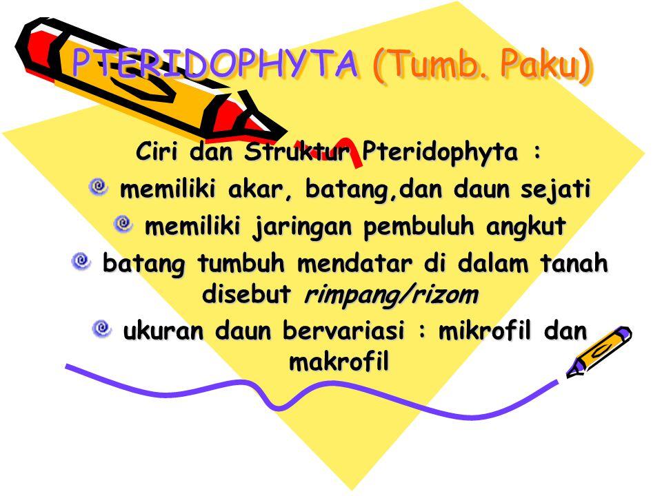 PTERIDOPHYTA (Tumb. Paku)