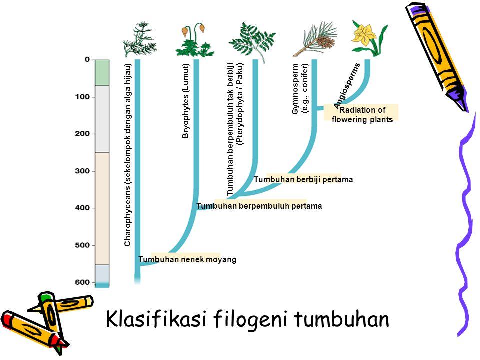 Klasifikasi filogeni tumbuhan