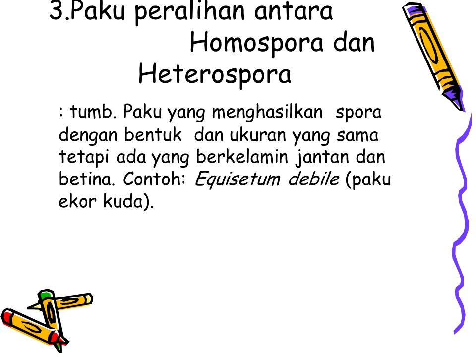 3.Paku peralihan antara Homospora dan Heterospora