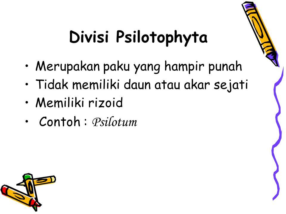 Divisi Psilotophyta Merupakan paku yang hampir punah