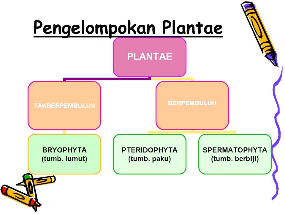 Pengelompokan Plantae