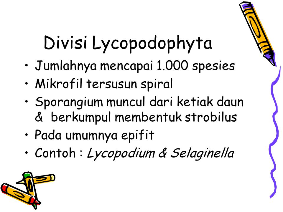 Divisi Lycopodophyta Jumlahnya mencapai 1.000 spesies