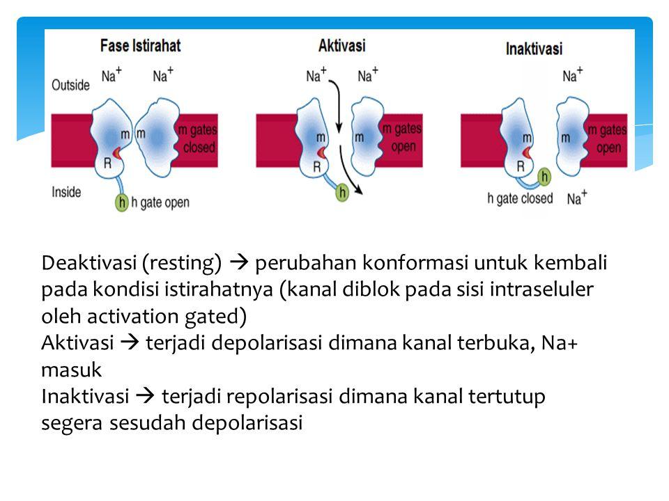 Deaktivasi (resting)  perubahan konformasi untuk kembali pada kondisi istirahatnya (kanal diblok pada sisi intraseluler oleh activation gated)