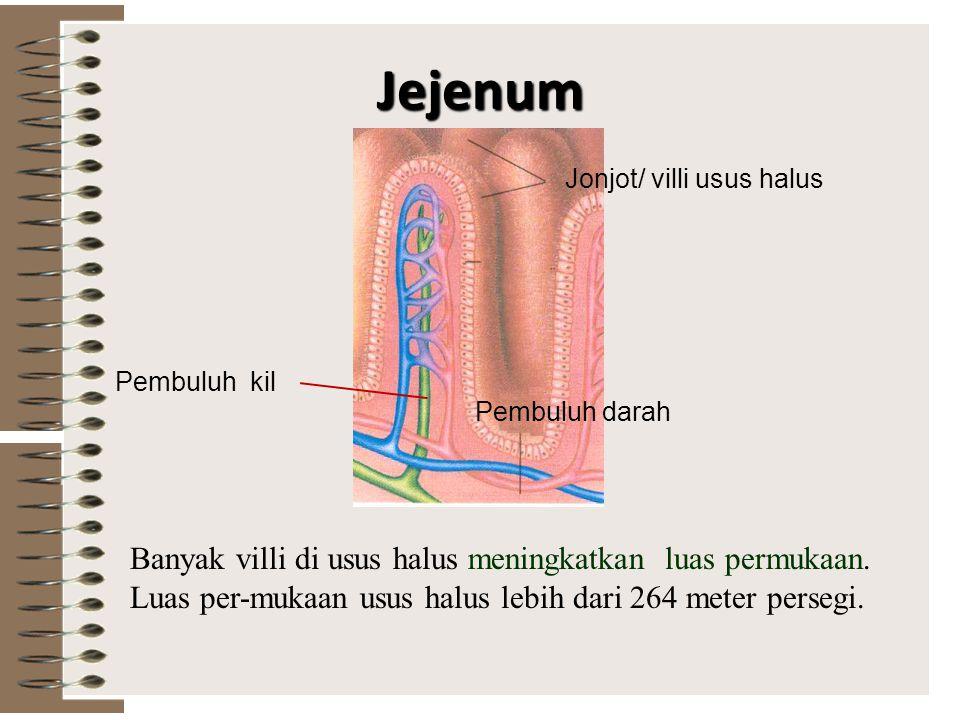 Jejenum Jonjot/ villi usus halus. Pembuluh kil. Pembuluh darah.