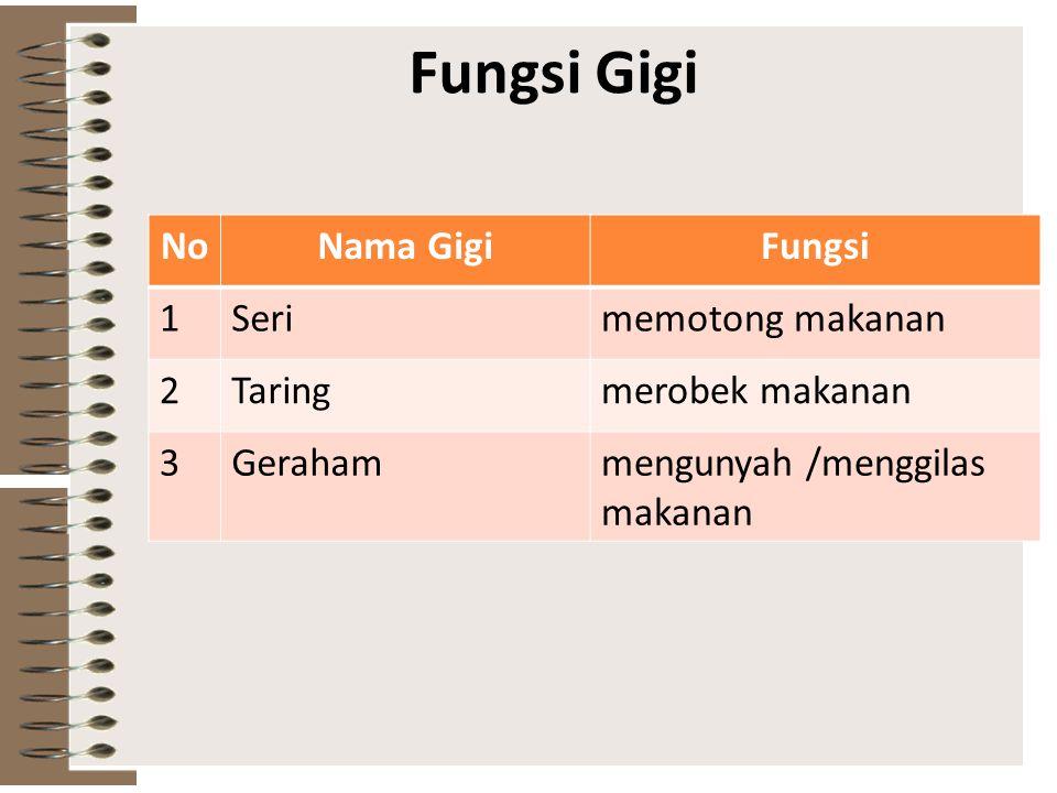 Fungsi Gigi No Nama Gigi Fungsi 1 Seri memotong makanan 2 Taring