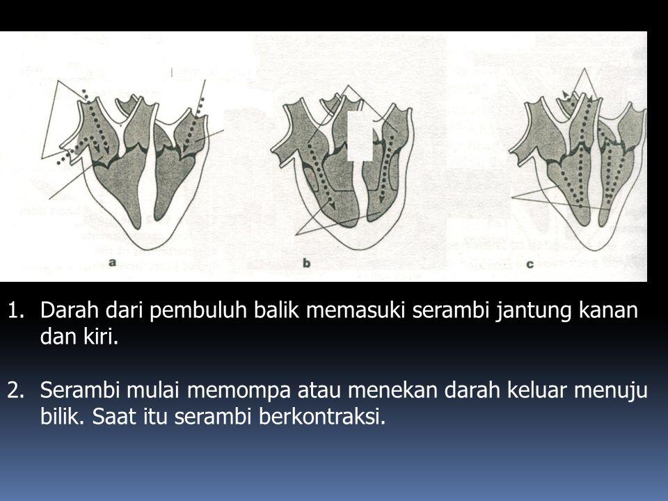 Darah dari pembuluh balik memasuki serambi jantung kanan dan kiri.
