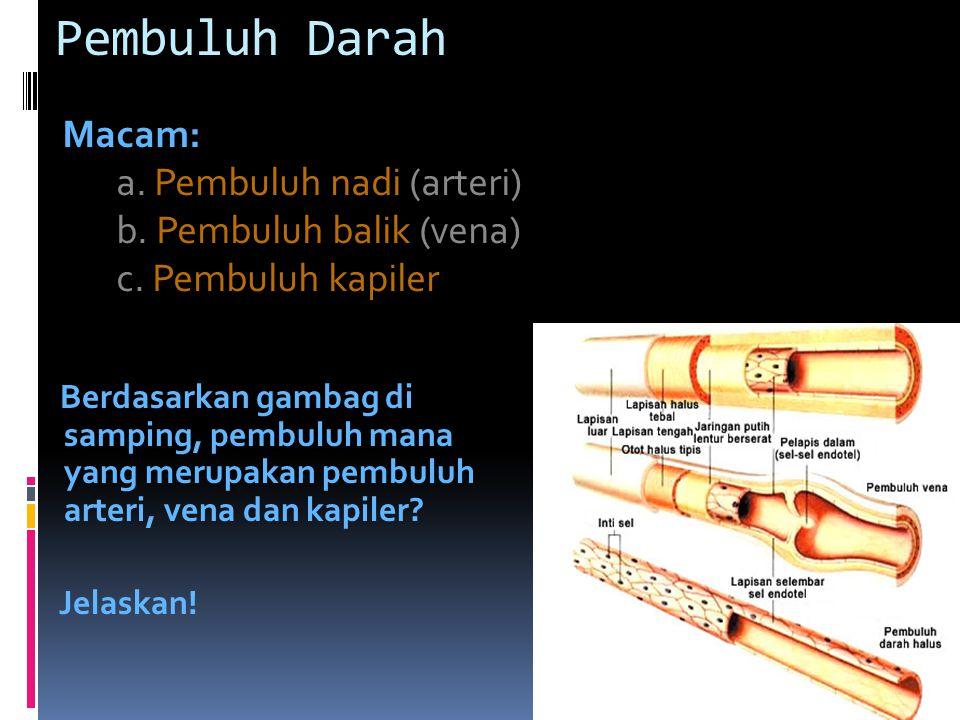 Pembuluh Darah Macam: a. Pembuluh nadi (arteri) b. Pembuluh balik (vena) c. Pembuluh kapiler