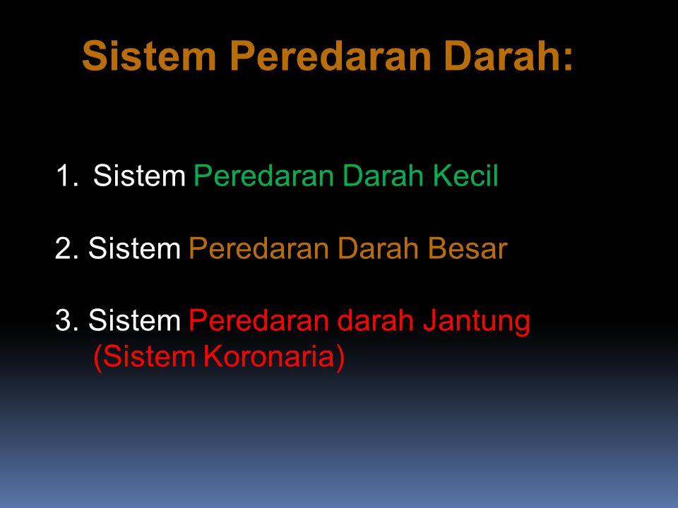 Sistem Peredaran Darah:
