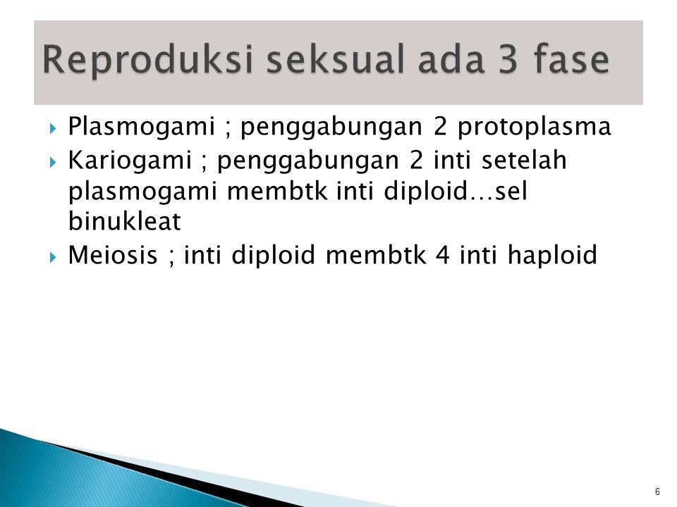 Reproduksi seksual ada 3 fase