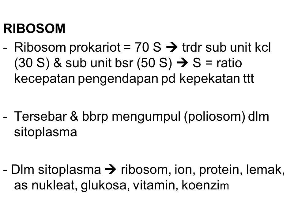 RIBOSOM Ribosom prokariot = 70 S  trdr sub unit kcl (30 S) & sub unit bsr (50 S)  S = ratio kecepatan pengendapan pd kepekatan ttt.