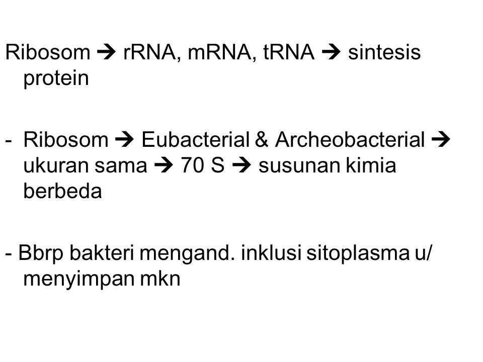 Ribosom  rRNA, mRNA, tRNA  sintesis protein